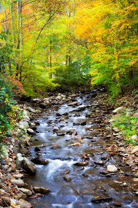 Mountain creek in the fall.  This creek is near our home in the mountains.