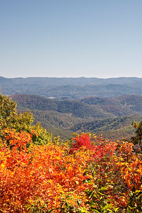 Blue Ridge Mountains in Autumn - Beautiful orange foliage in the foreground