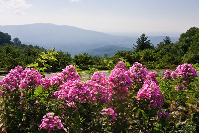 View from Switzerland Inn in Little Switzerland, NC.  Blue Ridge Mountains with pink flowers in the foreground.