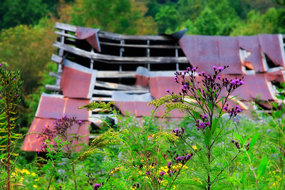 Old Barn & Wildflowers