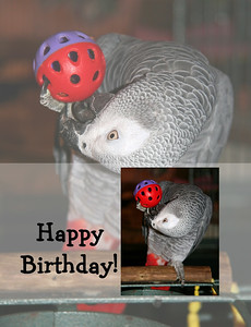 Parrot Birthday Cards