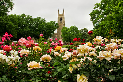 Duke University Chapel Rose Garden