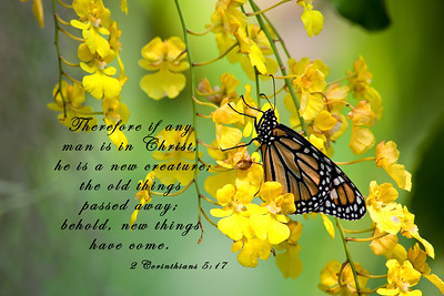 Butterflies in Scripture