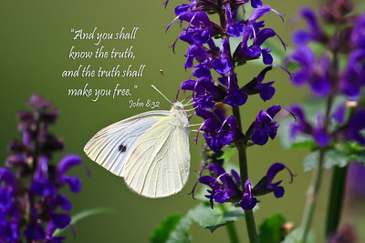Butterfly and Scripture