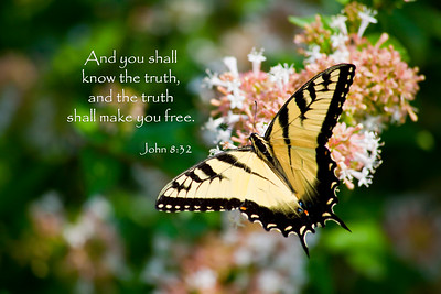 John 8:32 And you shall know the truth, and the truth shall make you free.Eastern Tiger Swallowtail on Abelia