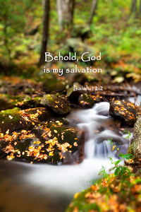 Forest StreamIsaiah 12:2 Behold, God is my salvation