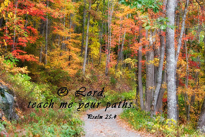 Piney Mountain Road in the FallPsalm 25:4 O Lord, teach me your paths