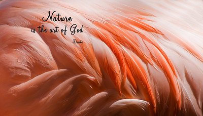 Nature is the Art of God