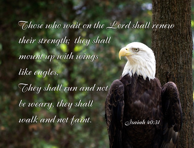Bald Eagle and Scripture