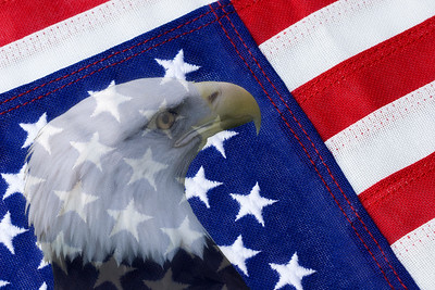 American Flag and Bald Eagle