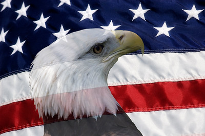 American Flag and Bald EagleBald Eagle with American Flag